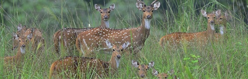 Visit the largest Manmade Jungle Safari of Asia in the Capital City of Chattisgarh