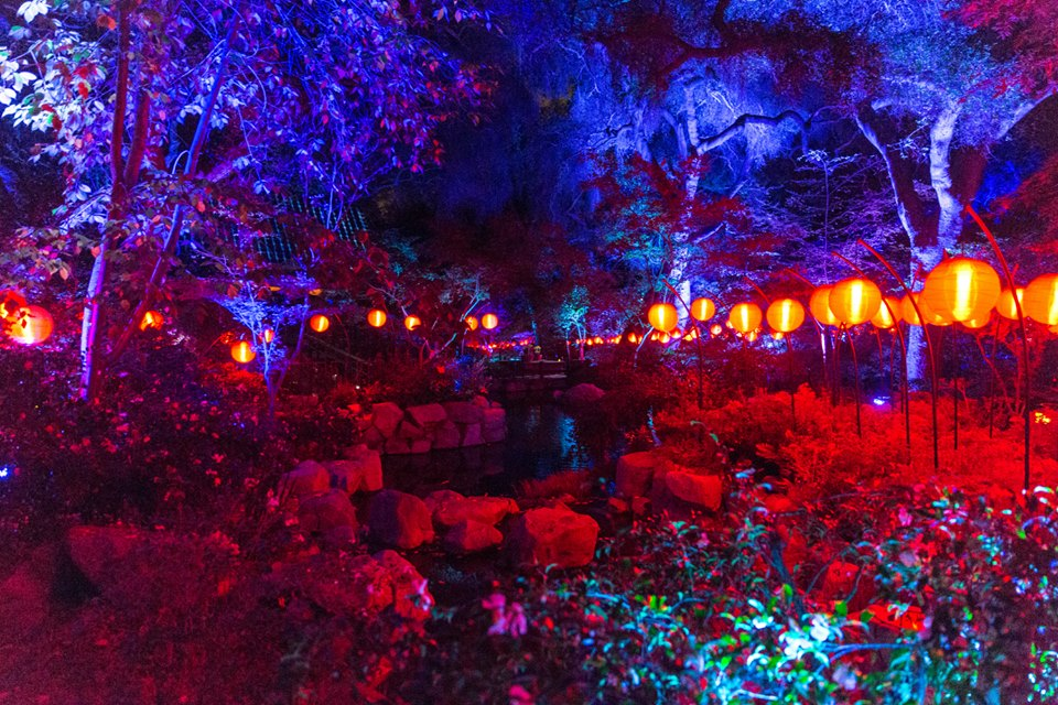 California 39 S Descanso Gardens A Forest Of Lights
