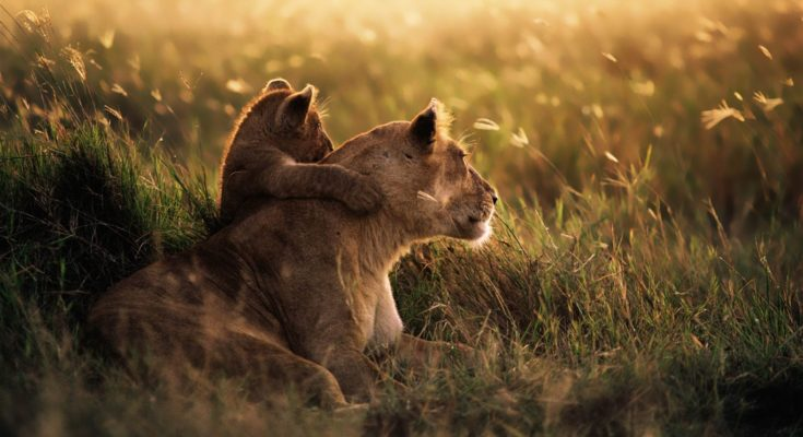 National Parks in Africa for the Love of Wildlife and Adventure