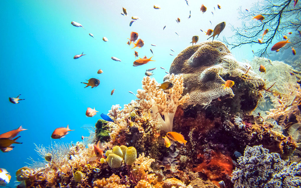 Find Coral Reefs