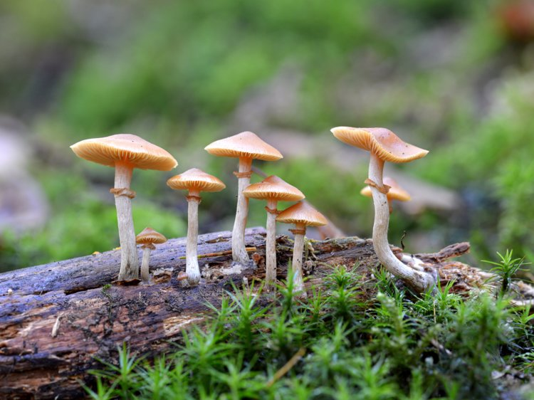 Kodaikanal - The City of Magic Mushroom