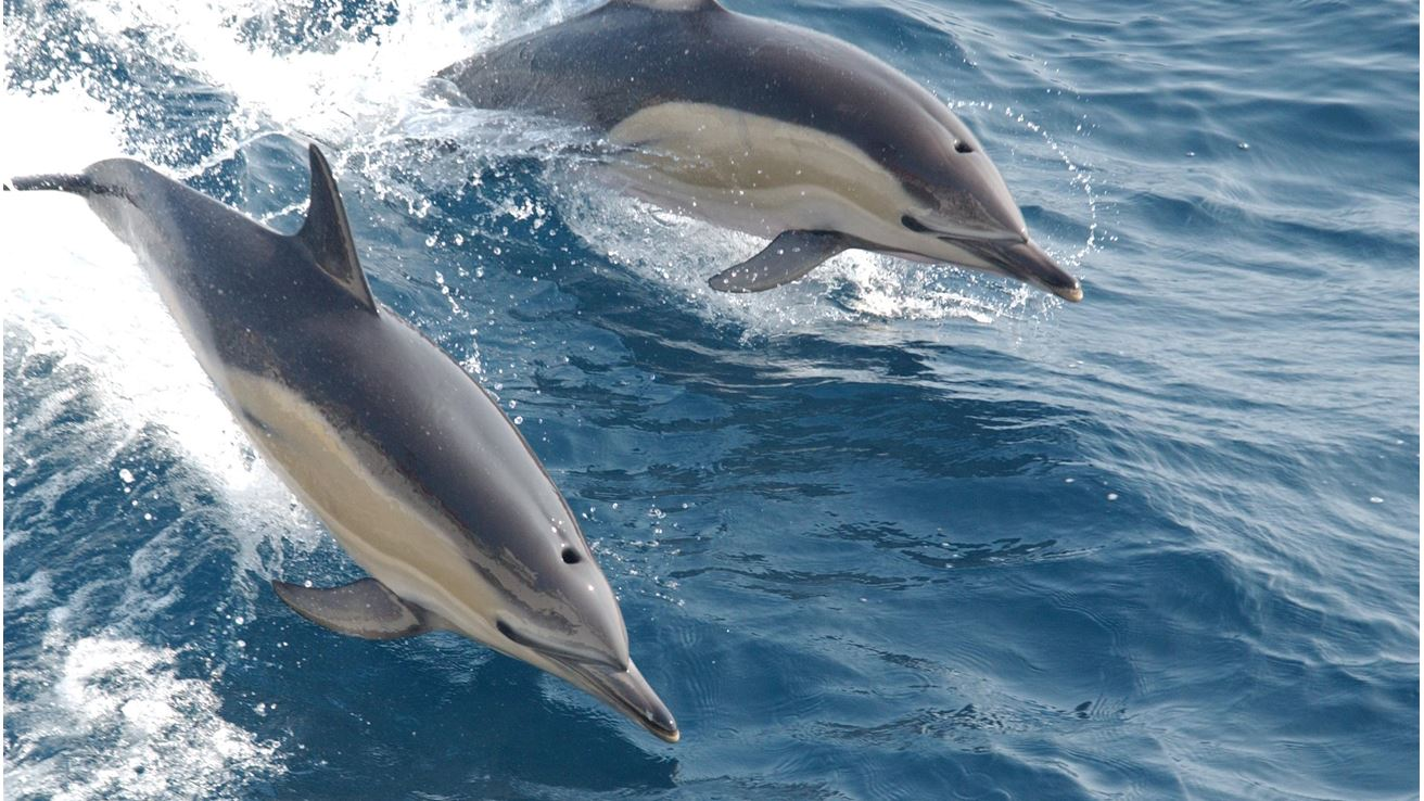 Best Places to Spot Dolphins in India