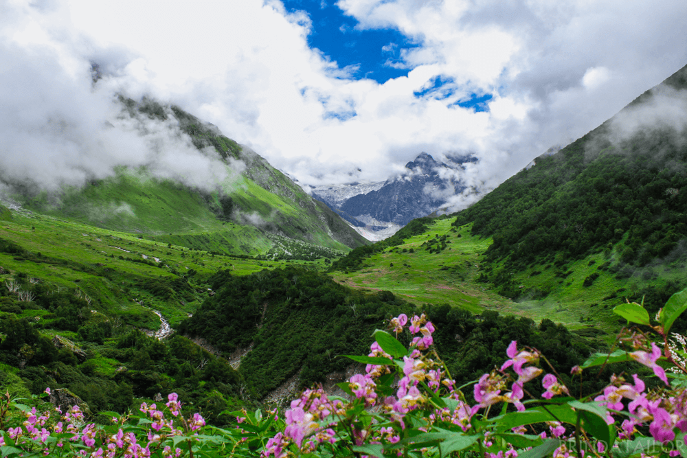 Top 5 National Parks of India - Exploring should never stop